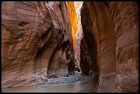 Paria River flowing in glowing slot canyon. Vermilion Cliffs National Monument, Arizona, USA ( )