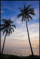 Palm trees and people in water at sunset. Phu Quoc Island, Vietnam