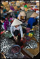 Women selling fish at market, Duong Dong. Phu Quoc Island, Vietnam ( color)