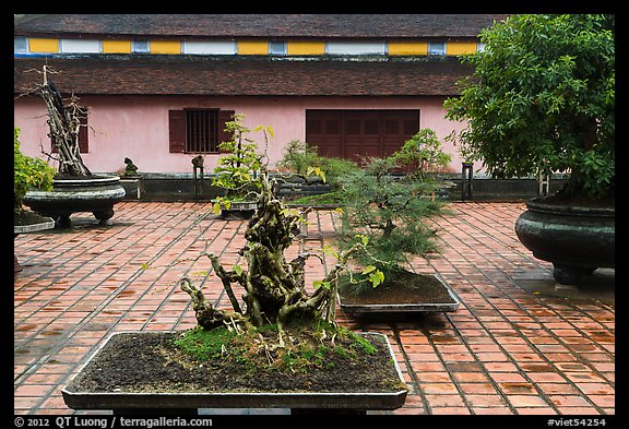 Bonsai trees, Thien Mu pagoda. Hue, Vietnam
