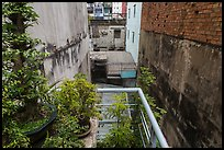 Potted plants on balcony garden. Ho Chi Minh City, Vietnam ( color)