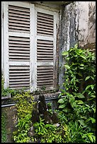 Plants and window shutters. Ho Chi Minh City, Vietnam ( color)