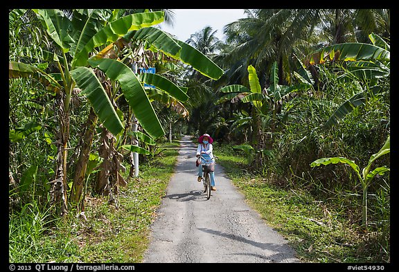 Woman bicycling on narrow road surrounded by banana trees. Ben Tre, Vietnam