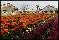 Pictures of Flower Nurseries