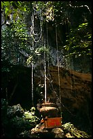 Urn and lianas near the entrance of upper cave, Phong Nha Cave. Vietnam (color)