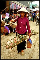 Woman carrying two live pigs, That Khe market. Northest Vietnam