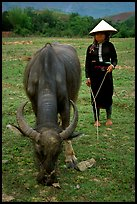 Thai women wearing her traditional dress and the Vietnamese conical hat, with water buffalo, near Son La. Northwest Vietnam