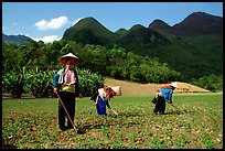 Dzao women raking the fields, near Tuan Giao. Northwest Vietnam