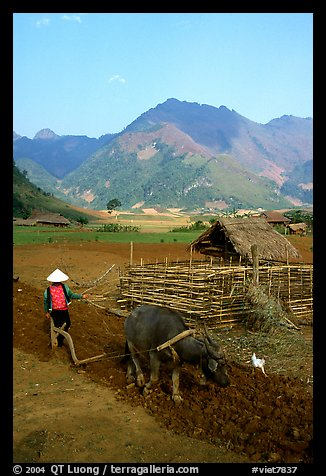Woman plows a field  close to a hut, near Tuan Giao. Northwest Vietnam (color)