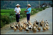 Thai women herding ducks, Tuan Giao. Northwest Vietnam