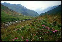 Wildflowers and mountains in the Tram Ton Pass area. Sapa, Vietnam