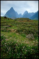 Wildflowers and peaks in the Tram Ton Pass area. Sapa, Vietnam