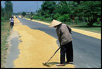 Rice being dried on sides of road. Mekong Delta, Vietnam