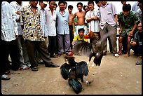 Rooster fight is a popular past time. Mekong Delta, Vietnam (color)