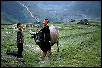 Playing with the water buffalo. Sapa, Vietnam