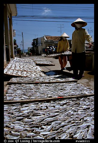 Women carrying a panel of fish being dried. Vung Tau, Vietnam